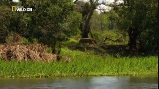پلنگ آمازون