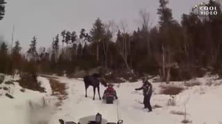 حمله حیوانات به انسان 2