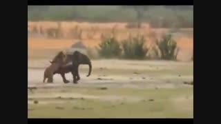مبارزه حیوانات