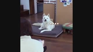 وقتی یهویی  سگ میبینی ..ههه-یک فانی مومنت
