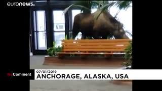 ملاقات غیرمنتظره یک گوزن شمالی از بیمارستانی در آلاسکا