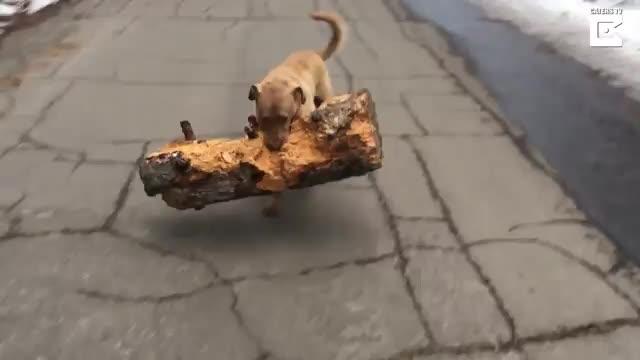 قرار بود شاخه رو بیاره، نه کنده!