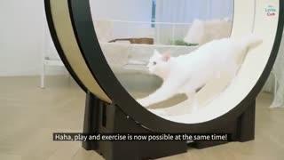 ابداع یک تردمیل برای گربهها!