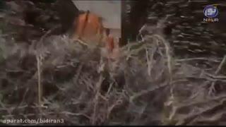 سریال عمر ابن خطاب فاروق العظم (قسمت سوم)