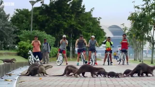 سمورهای دریایی در پارکهای سنگاپور