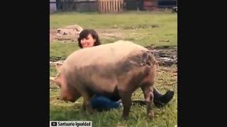 حیوانات مهربان باانسان یاانسان مهربان