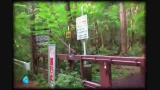 خودکشی گردی در ژاپن  ...!