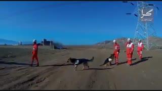 پرونده ویژه پلاسکو؛ سگهای حیاتبخش