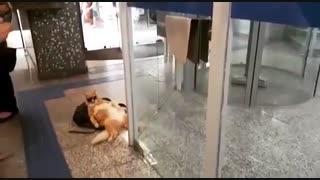گربه یکی از مراجعه کنندگان یک بانک برزیلی