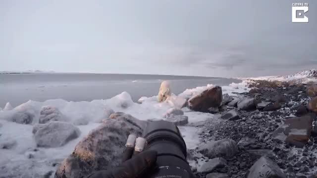 ترساندن خرس قطبی گرسنه توسط عکاس تنها