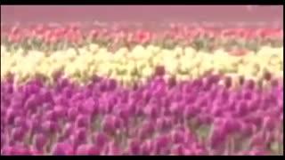 نماهنگ : سرود انقلابی به لاله ی در خون خفته