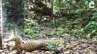 عکس العمل حیوانات به آینه در وسط جنگل
