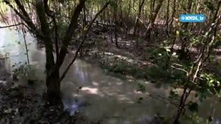 جزایر وحشی اندونزی با دوبله فارسی - قسمت 1