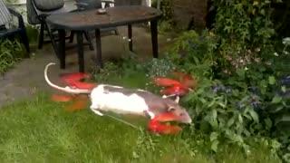 استفاده عجیب از بدن حیوانات برای ساخت پهپاد