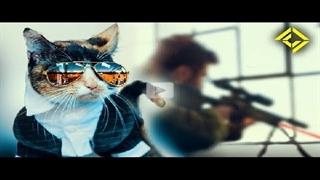 گربه سرویس مخفی