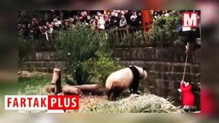 صحنه دلهره آور سقوط کودک به داخل محفظه باغ وحش!