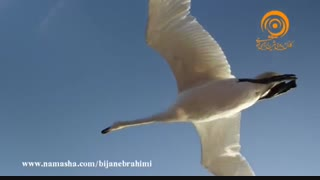 مستند پرندگان