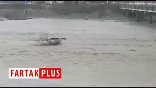 گرفتار شدن گرازها در رودخانه میناب