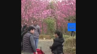 شکوفههای گیلاس و دریایی از رنگ در چین