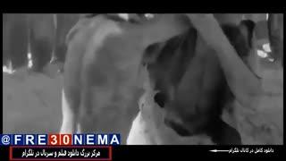 دانلود رایگان فیلم غلامرضا تختیFULL HD|غلامرضا تختی|فیلم غلامرضا تختی