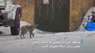 آلودگی ناشی از صنایع در سیبری؛ برف سیاه در «کِمِرو»