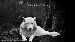 مثل گرگ باش