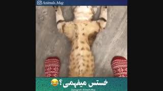 باران .این داستان : گربه گشاد
