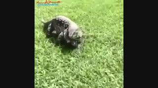 دانشمندا یه حیوون جدید پیدا کردن که از چشماش دود بیرون میاد!....XDXDXD