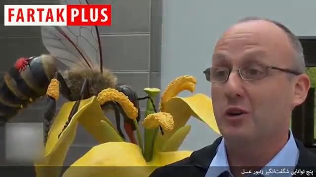 توانایی های شگفت انگیز زنبور عسل