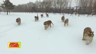 حمله حیوانات به دوربین ها
