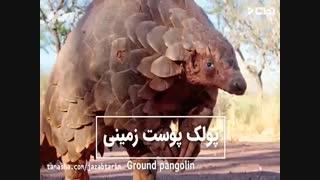 عجیب ترین و ترسناک ترین موجودات کشف شده در جهان