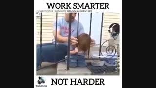 هوشمندانه کار کن نه سخت تر