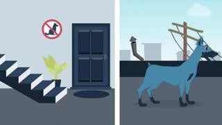 قوانین نگهداری حیوانات خانگی در آپارتمان ها