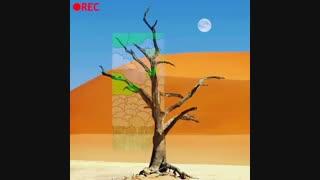 تیزر زیبای روز درختکاری