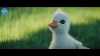 انیمیشن رویای یک اردک