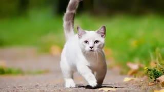 ▪جذاب ترین و شیرین ترین نژاد گربه ها▪