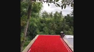 بالی - اندونزی