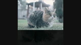 حیوانات خانگی و نازایی