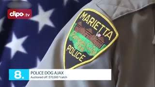 تاپ تایم - 10 سگ گرانقیمت دنیا