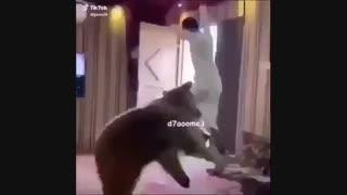 عاقبت شوخی با خرس