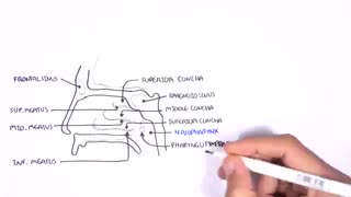 Anatomy of nasal cavity