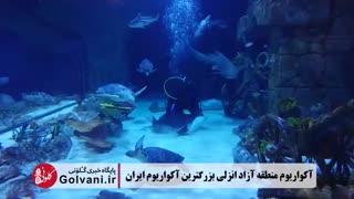 آکواریوم منطقه آزاد انزلی بزرگترین آکواریوم ایران