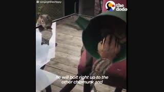 منم از این موش خرما ها میخواااااااممممم