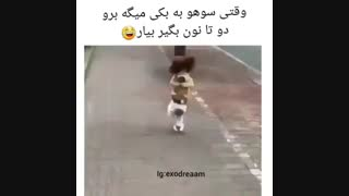 اکسو وقتی سوهو به بکی میگه برو نون بگیر خخخ