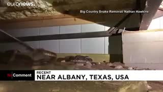 عملیات مارگیری در تگزاس