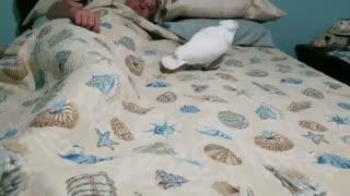 شیطنت های طوطی بامزه  قبل از خواب