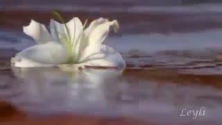 Franck Pourcel - Morir de Amorموزیک ویدیوی رومانتیک