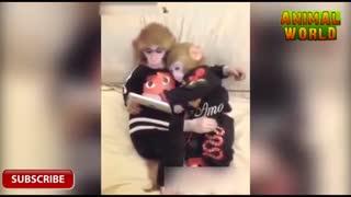 میمون های نسل جدید و اعتیاد به اینترنت