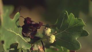 مستند سیاره سبز - The Green Planet 2012 با دوبله فارسی