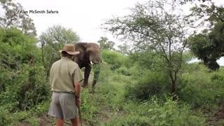 مقابله مرد شجاع با فیل خشمگین
